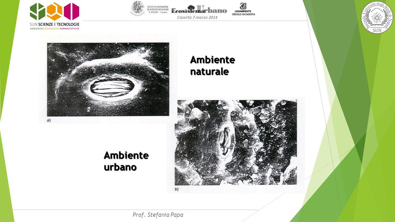 Ambiente naturale Ambiente urbano Caserta 7 marzo 2014 Prof. Stefania Papa