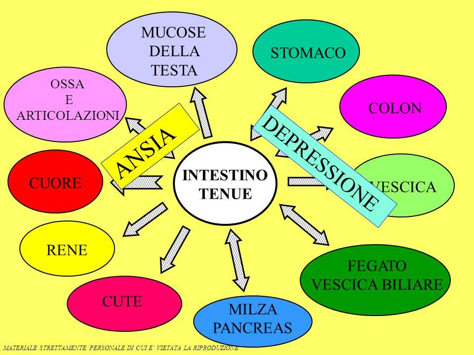 INTESTINO TENUE OSSA E ARTICOLAZIONI MUCOSE DELLA TESTA STOMACO COLON VESCICA FEGATO VESCICA BILIARE MILZA PANCREAS CUORE RENE CUTE MATERIALE STRETTAMENTE PERSONALE DI CUI E' VIETATA LA RIPRODUZIONE ANSIA DEPRESSIONE