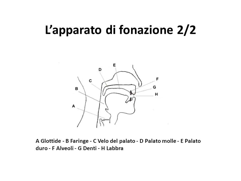 A Glottide - B Faringe - C Velo del palato - D Palato molle - E Palato duro - F Alveoli - G Denti - H Labbra L'apparato di fonazione 2/2