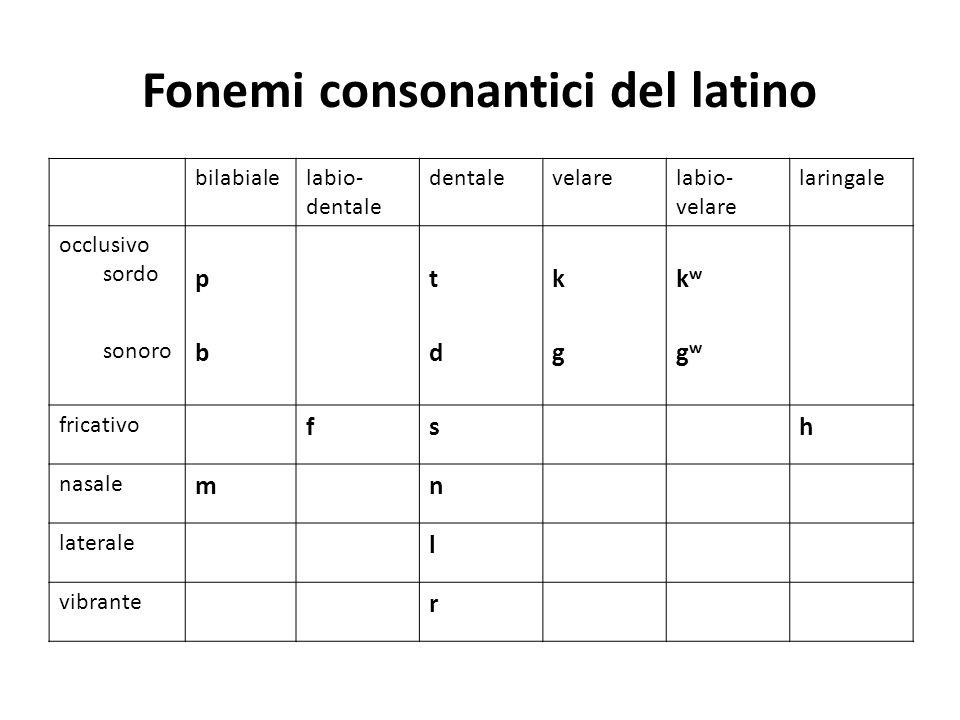 Fonemi consonantici del latino bilabialelabio- dentale dentalevelarelabio- velare laringale occlusivo sordo p t k kw kw sonoro bdggwgw fricativo fsh n
