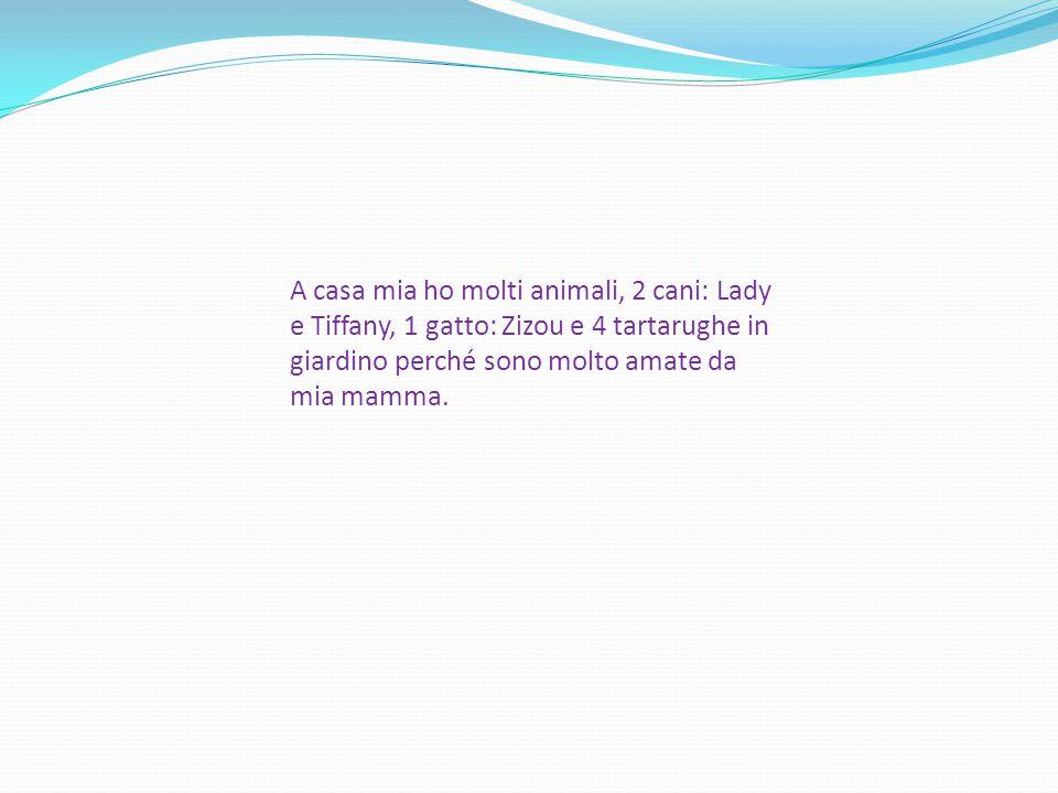 A casa mia ho molti animali, 2 cani: Lady e Tiffany, 1 gatto: Zizou e 4 tartarughe in giardino perché sono molto amate da mia mamma.