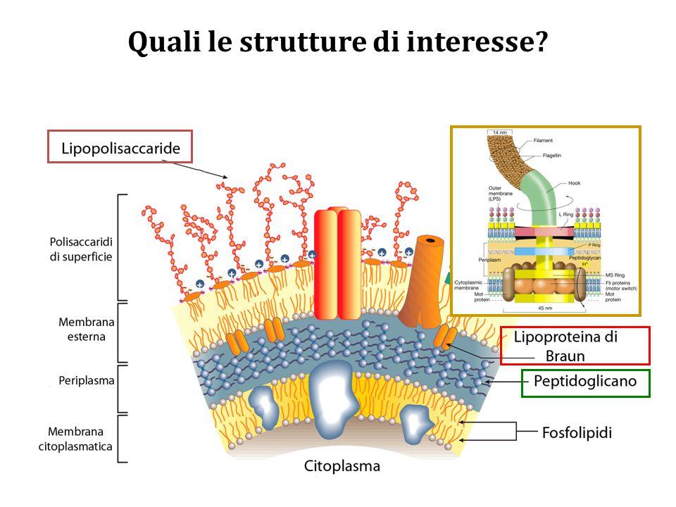 Quali le strutture di interesse?
