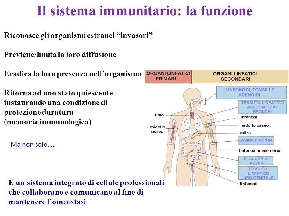 Esistono due fondamentali sistemi di riconoscimento e di difesa, correlati tra loro: quello dell'immunità innata, detta anche naturale o nativa, in quanto pre- esistente all'esposizione agli agenti microbici o alle macromolecole estranee, e quello dell'immunità adattativa.
