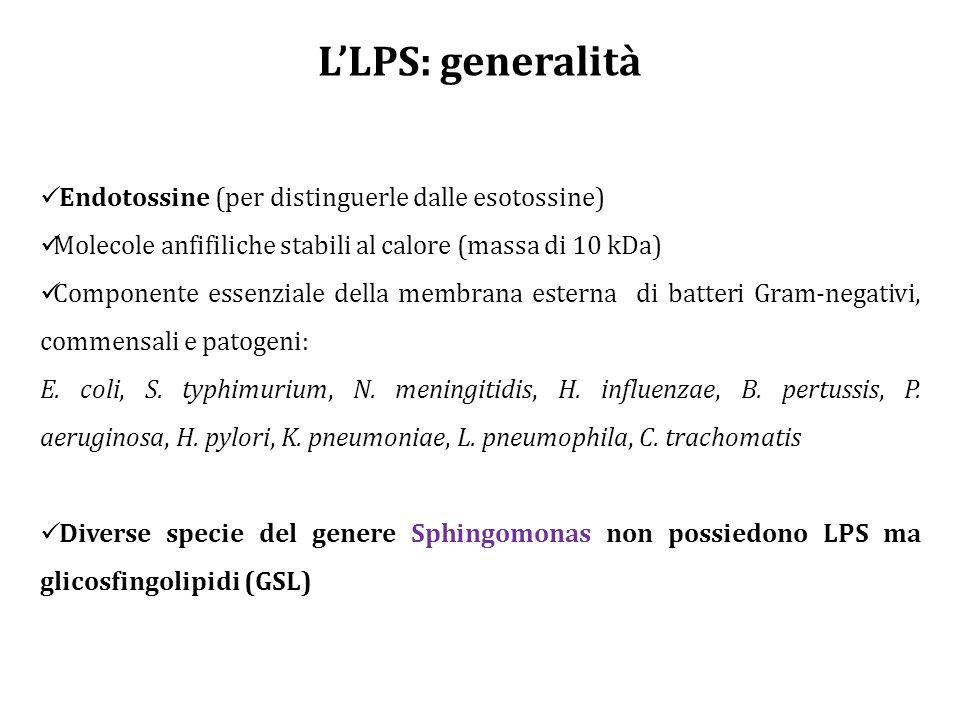 L'LPS: generalità Endotossine (per distinguerle dalle esotossine) Molecole anfifiliche stabili al calore (massa di 10 kDa) Componente essenziale della membrana esterna di batteri Gram-negativi, commensali e patogeni: E.