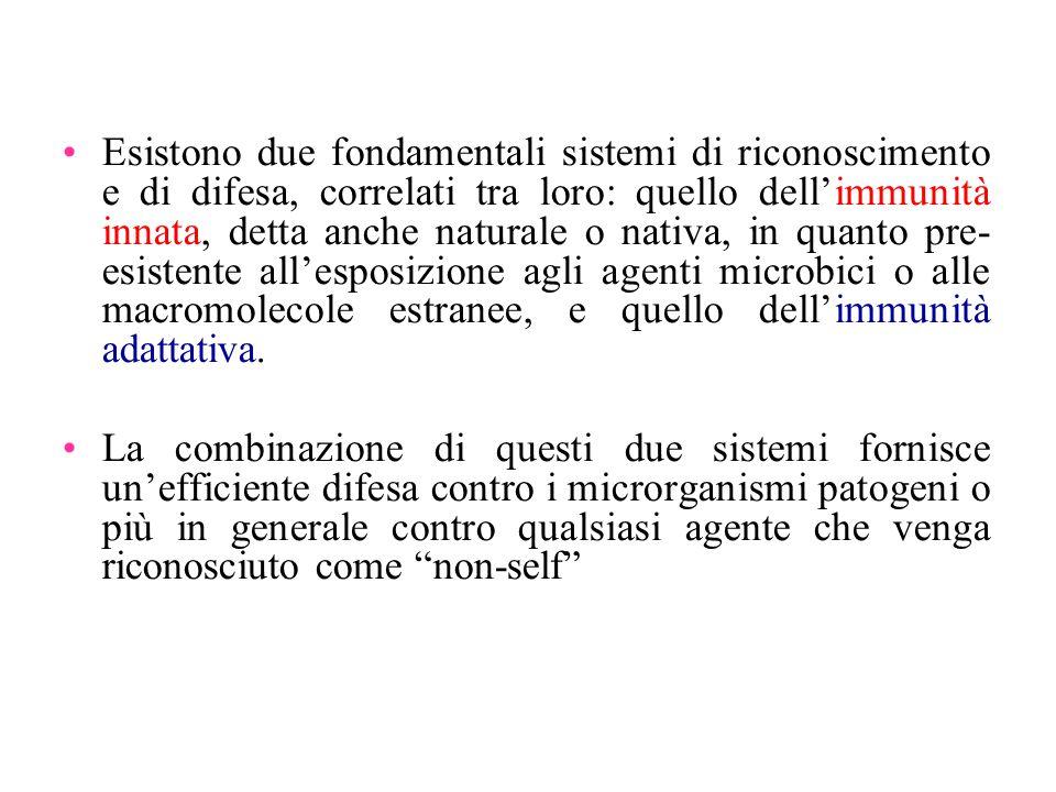 La regione del Core [1] 1.Sulla base della composizione in zuccheri (monosaccaridi) nelle Enterobacteriaceae si distinguono: CORE ESTERNO CORE INTERNO 2.