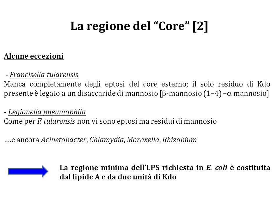La regione del Core [2] Alcune eccezioni - Francisella tularensis Manca completamente degli eptosi del core esterno; il solo residuo di Kdo presente è legato a un disaccaride di mannosio [  -mannosio (1–4) –  mannosio] - Legionella pneumophila Come per F.