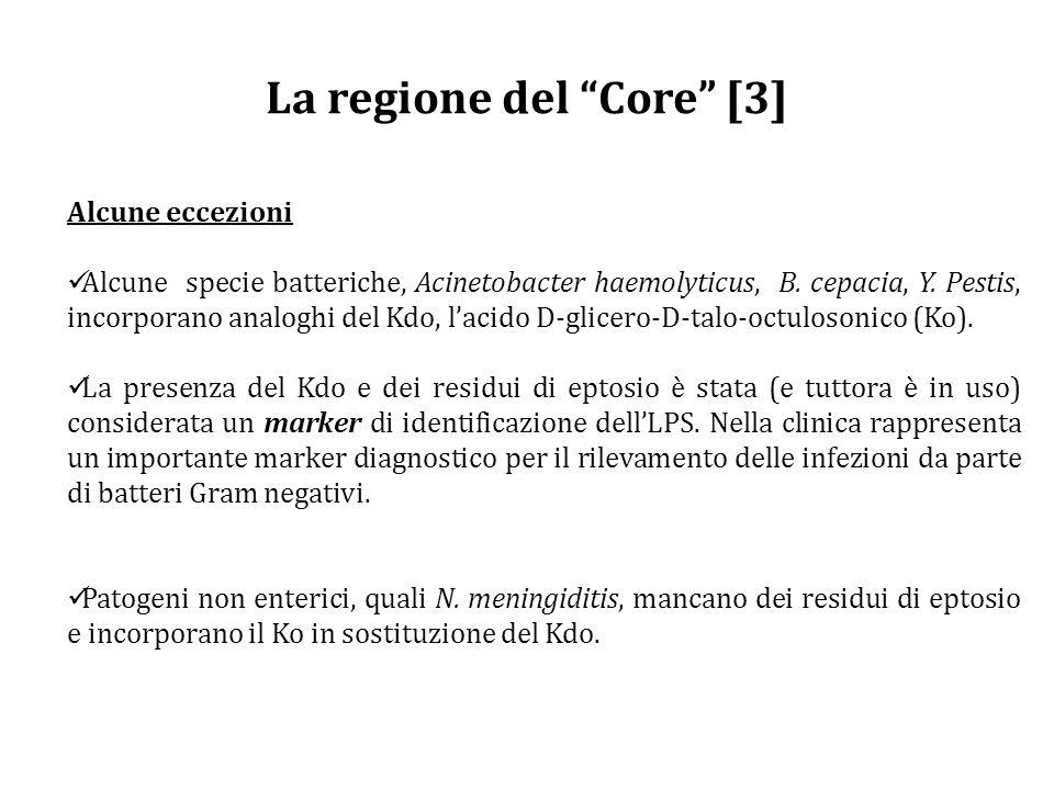 La regione del Core [3] Alcune eccezioni Alcune specie batteriche, Acinetobacter haemolyticus, B.