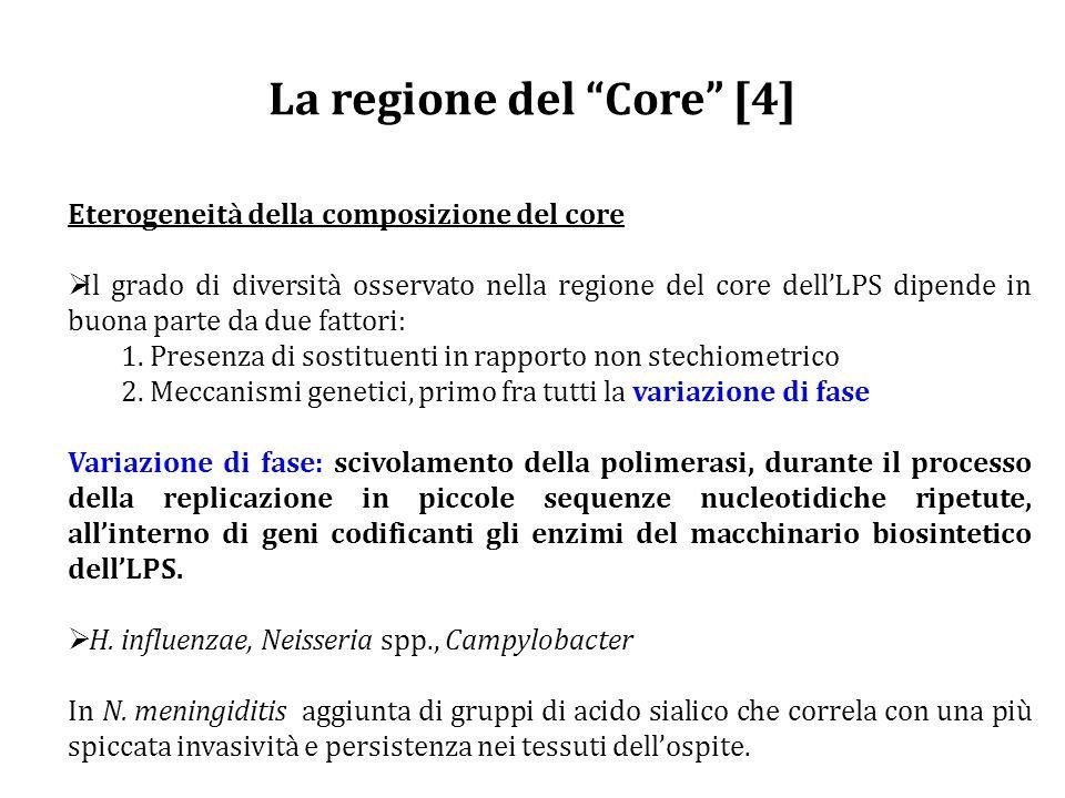 La regione del Core [4] Eterogeneità della composizione del core  Il grado di diversità osservato nella regione del core dell'LPS dipende in buona parte da due fattori: 1.