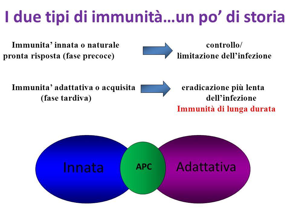 I due tipi di immunità…un po' di storia Immunita' innata o naturalecontrollo/ pronta risposta (fase precoce) limitazione dell'infezione Immunita' adattativa o acquisita eradicazione più lenta (fase tardiva) dell'infezione Immunità di lunga durata Innata Adattativa APC