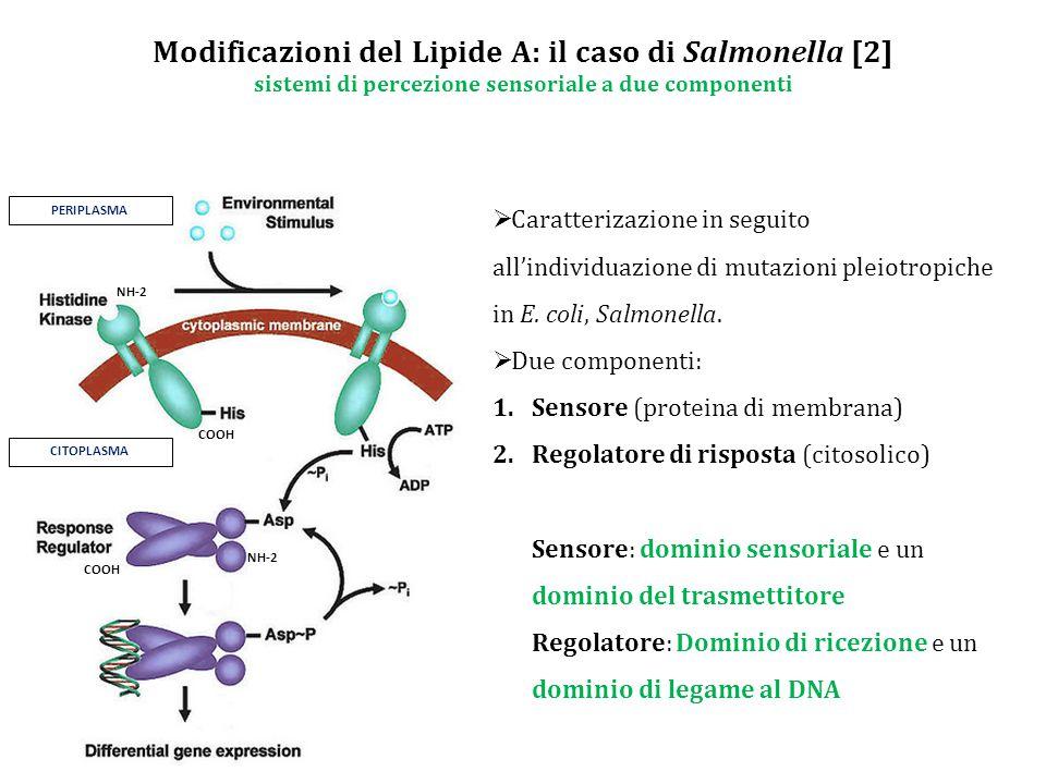 Modificazioni del Lipide A: il caso di Salmonella [2] sistemi di percezione sensoriale a due componenti PERIPLASMA CITOPLASMA NH-2 COOH  Caratterizazione in seguito all'individuazione di mutazioni pleiotropiche in E.