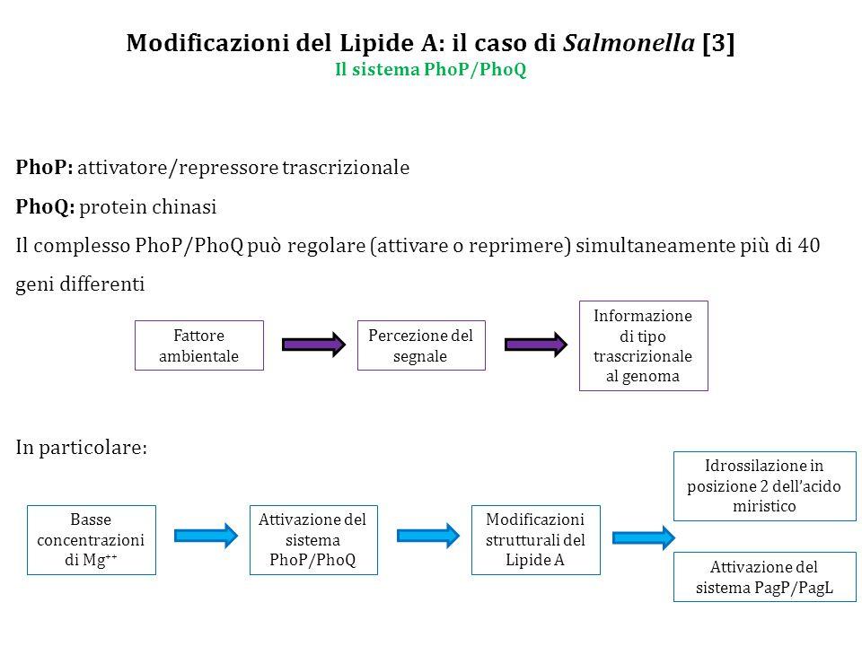 Modificazioni del Lipide A: il caso di Salmonella [3] Il sistema PhoP/PhoQ PhoP: attivatore/repressore trascrizionale PhoQ: protein chinasi Il complesso PhoP/PhoQ può regolare (attivare o reprimere) simultaneamente più di 40 geni differenti Fattore ambientale Percezione del segnale Informazione di tipo trascrizionale al genoma In particolare: Idrossilazione in posizione 2 dell'acido miristico Basse concentrazioni di Mg ++ Attivazione del sistema PhoP/PhoQ Modificazioni strutturali del Lipide A Attivazione del sistema PagP/PagL