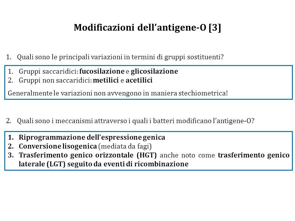Modificazioni dell'antigene-O [3] 1.Quali sono le principali variazioni in termini di gruppi sostituenti.