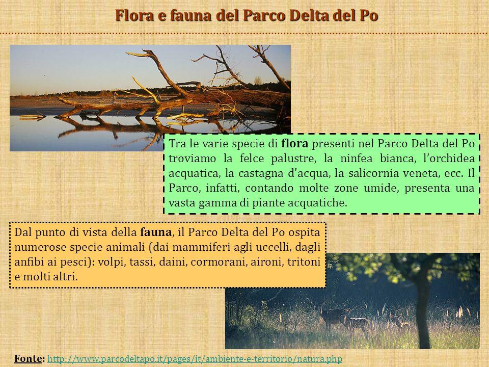 Flora e fauna del Parco Delta del Po Dal punto di vista della fauna, il Parco Delta del Po ospita numerose specie animali (dai mammiferi agli uccelli,