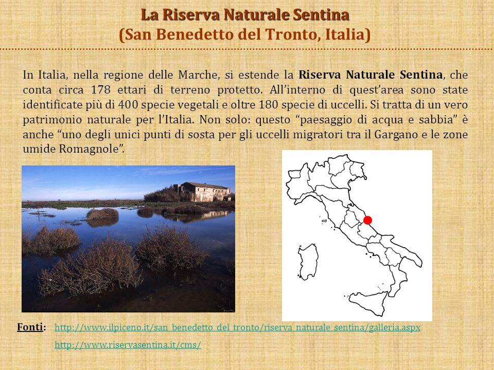 Fonti: http://www.ilpiceno.it/san_benedetto_del_tronto/riserva_naturale_sentina/galleria.aspx http://www.ilpiceno.it/san_benedetto_del_tronto/riserva_naturale_sentina/galleria.aspx http://www.riservasentina.it/cms/ Alcune specie di uccelli presenti nella Riserva Naturale Sentina sono: l'airone cenerino, l'albastrello, la ballerina gialla, il chiurlo maggiore, la cinciarella, il cormorano, il falco pellegrino, i fenicotteri, il gabbiano reale, il gheppio… Per quanto riguarda le specie vegetali, troviamo la salicornia, il ravastrello marittimo, la liquirizia, l'erba medica marina e molte altre.