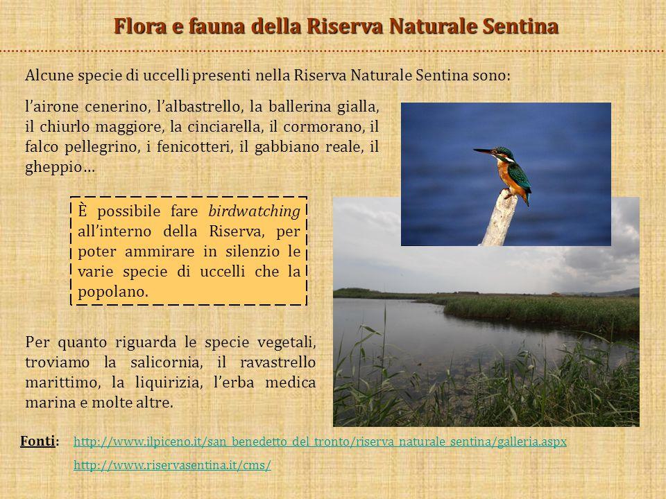 Fonti: http://www.ilpiceno.it/san_benedetto_del_tronto/riserva_naturale_sentina/galleria.aspx http://www.ilpiceno.it/san_benedetto_del_tronto/riserva_