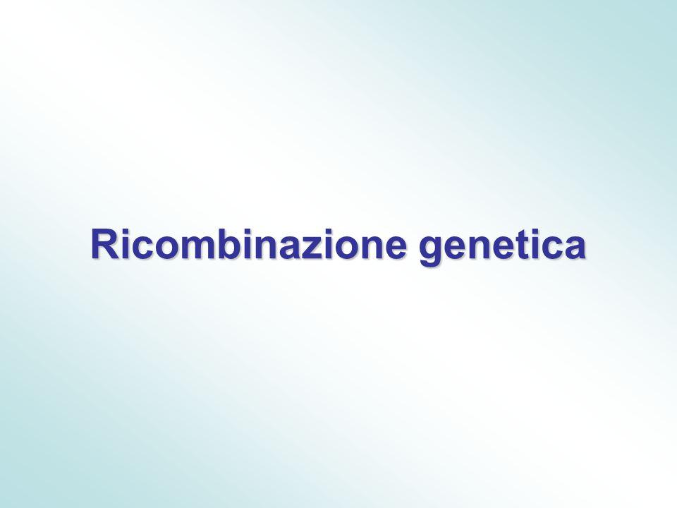 La ricombinazione genetica È un processo attraverso il quale due elementi genetici provenienti da fonti diverse si vengono a trovare nella stessa unità genetica.