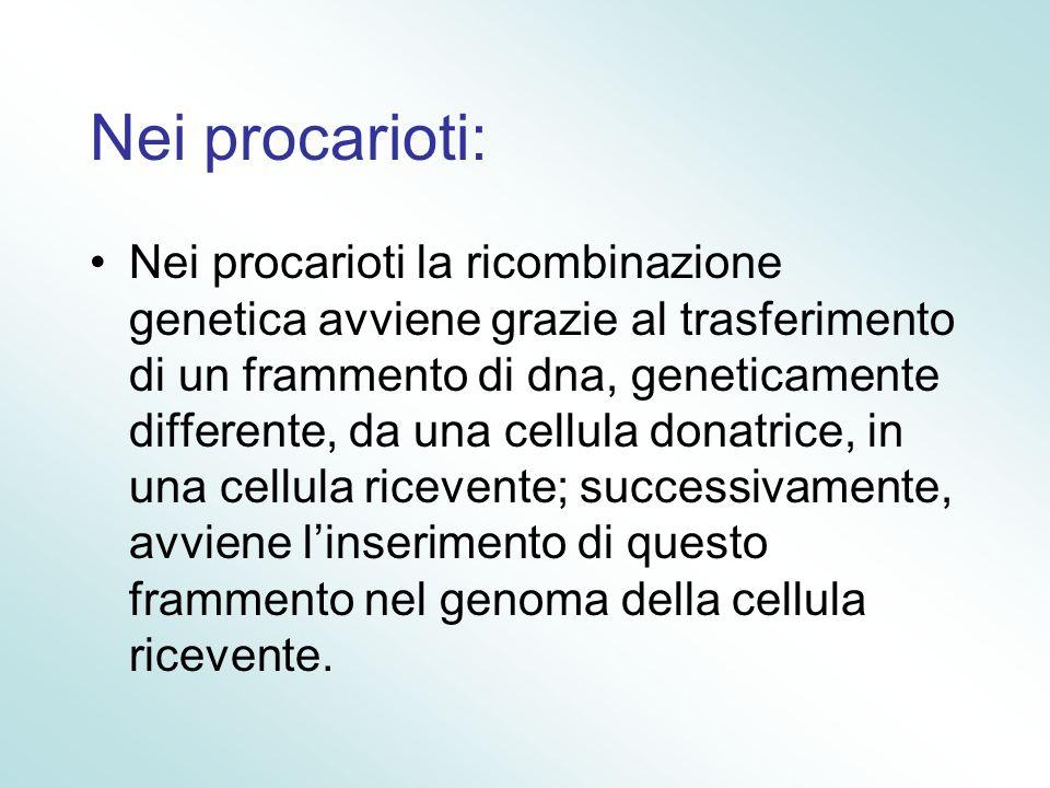 Nei procarioti: Nei procarioti la ricombinazione genetica avviene grazie al trasferimento di un frammento di dna, geneticamente differente, da una cel