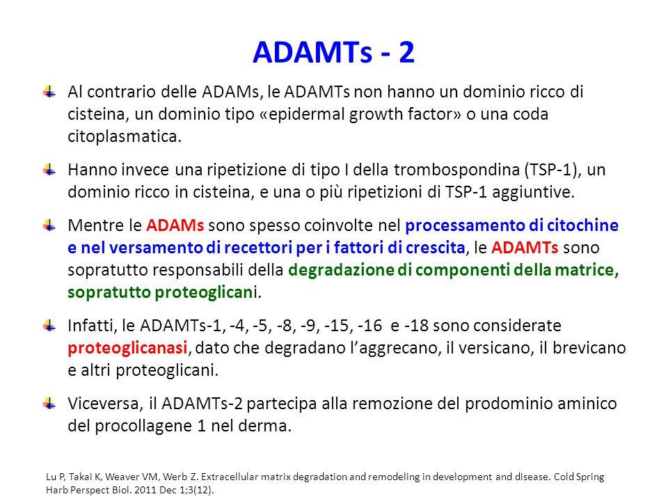 ADAMTs - 2 Al contrario delle ADAMs, le ADAMTs non hanno un dominio ricco di cisteina, un dominio tipo «epidermal growth factor» o una coda citoplasmatica.