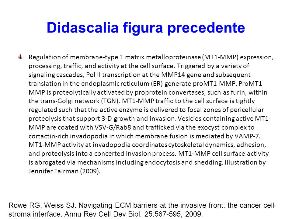 Didascalia figura precedente Regulation of membrane-type 1 matrix metalloproteinase (MT1-MMP) expression, processing, traffic, and activity at the cel