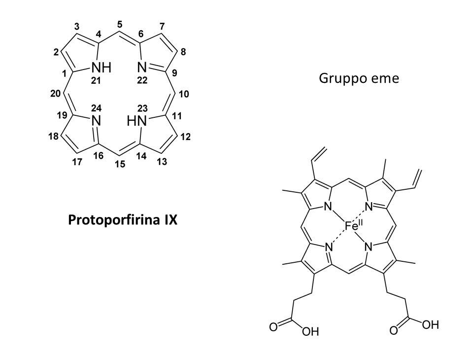 Gruppo eme Protoporfirina IX
