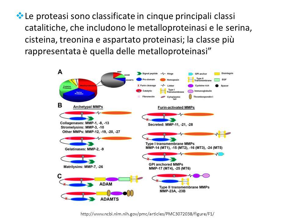  Le proteasi sono classificate in cinque principali classi catalitiche, che includono le metalloproteinasi e le serina, cisteina, treonina e aspartato proteinasi; la classe più rappresentata è quella delle metalloproteinasi http://www.ncbi.nlm.nih.gov/pmc/articles/PMC3072038/figure/F1/