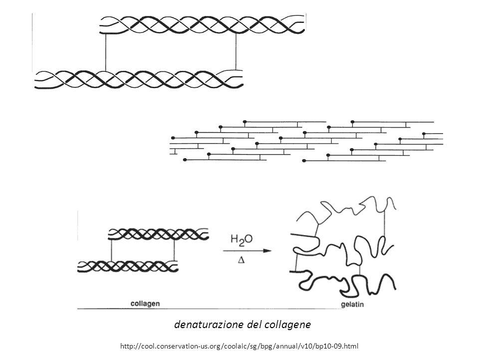 http://cool.conservation-us.org/coolaic/sg/bpg/annual/v10/bp10-09.html denaturazione del collagene