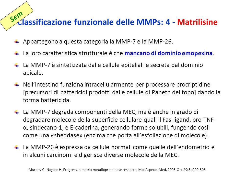 Classificazione funzionale delle MMPs: 4 - Matrilisine Appartegono a questa categoria la MMP-7 e la MMP-26.