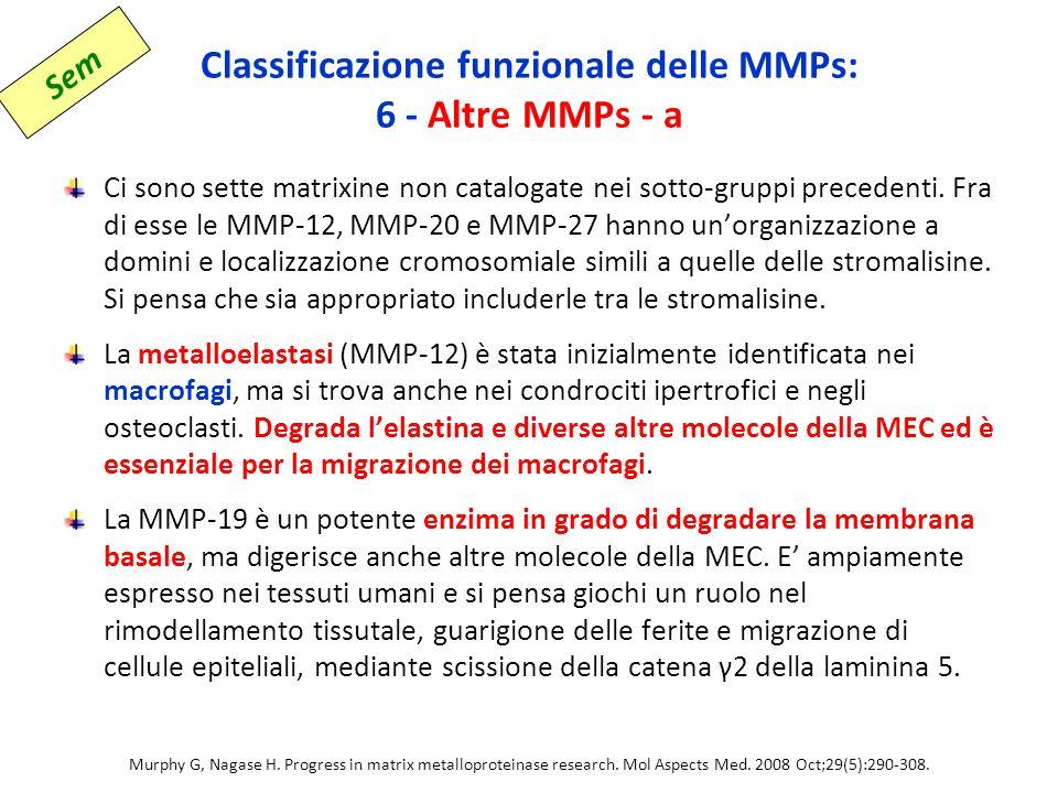 Classificazione funzionale delle MMPs: 6 - Altre MMPs - a Ci sono sette matrixine non catalogate nei sotto-gruppi precedenti.