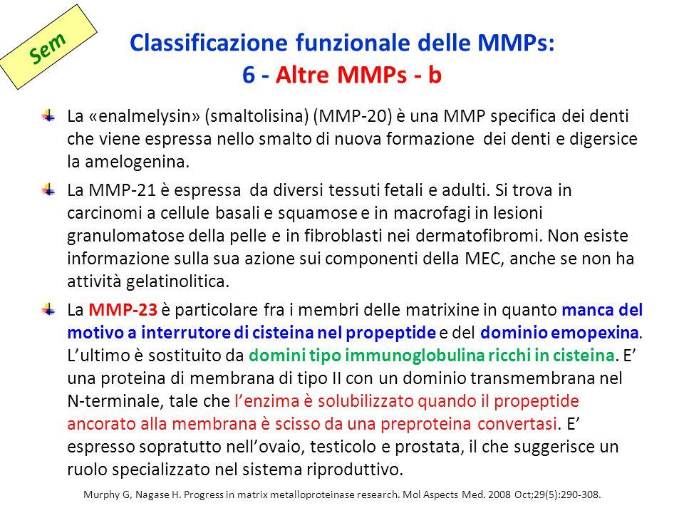 Classificazione funzionale delle MMPs: 6 - Altre MMPs - b La «enalmelysin» (smaltolisina) (MMP-20) è una MMP specifica dei denti che viene espressa nello smalto di nuova formazione dei denti e digersice la amelogenina.