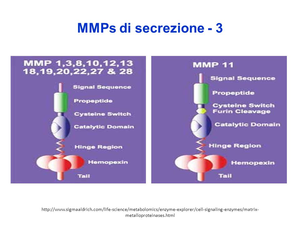 MMPs di secrezione - 3 http://www.sigmaaldrich.com/life-science/metabolomics/enzyme-explorer/cell-signaling-enzymes/matrix- metalloproteinases.html