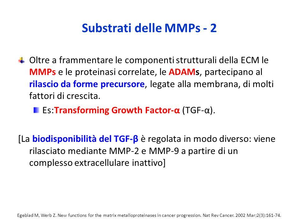 Substrati delle MMPs - 2 Oltre a frammentare le componenti strutturali della ECM le MMPs e le proteinasi correlate, le ADAMs, partecipano al rilascio da forme precursore, legate alla membrana, di molti fattori di crescita.