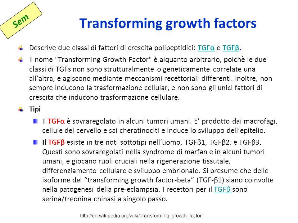 Transforming growth factors Descrive due classi di fattori di crescita polipeptidici: TGFα e TGFβ.TGFαTGFβ Il nome Transforming Growth Factor è alquanto arbitrario, poichè le due classi di TGFs non sono strutturalmente o geneticamente correlate una all'altra, e agiscono mediante meccanismi recettoriali differenti.