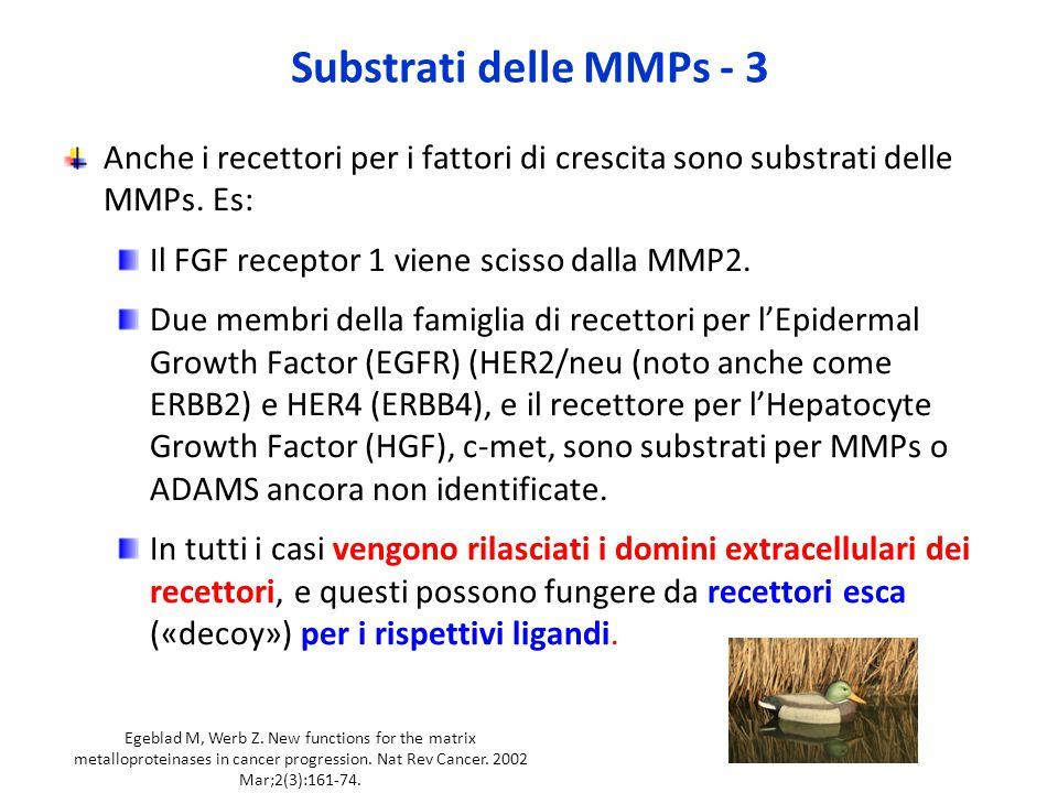 Substrati delle MMPs - 3 Anche i recettori per i fattori di crescita sono substrati delle MMPs.
