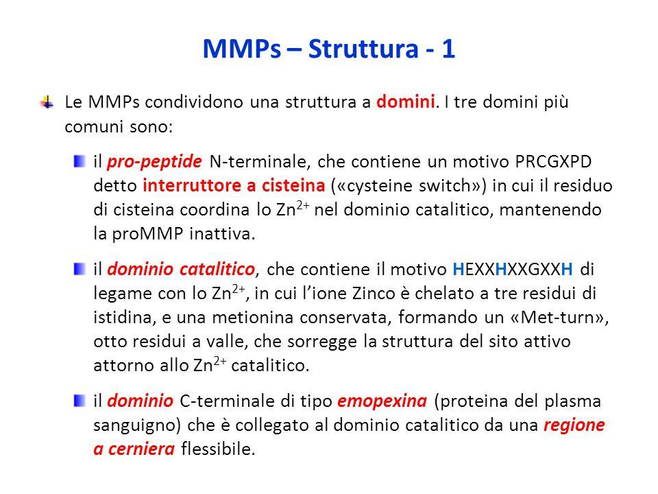 MMPs – Struttura - 1 Le MMPs condividono una struttura a domini.