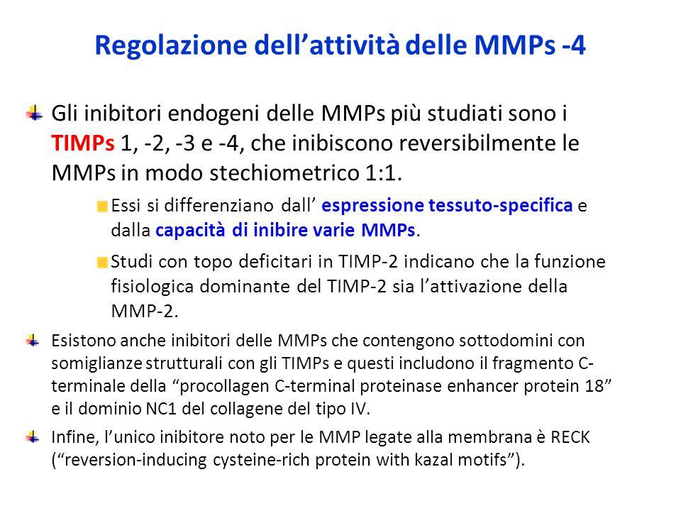 Regolazione dell'attività delle MMPs -4 Gli inibitori endogeni delle MMPs più studiati sono i TIMPs 1, -2, -3 e -4, che inibiscono reversibilmente le MMPs in modo stechiometrico 1:1.