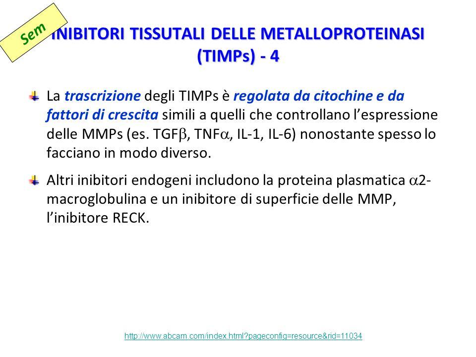 INIBITORI TISSUTALI DELLE METALLOPROTEINASI (TIMPs) - 4 La trascrizione degli TIMPs è regolata da citochine e da fattori di crescita simili a quelli che controllano l'espressione delle MMPs (es.