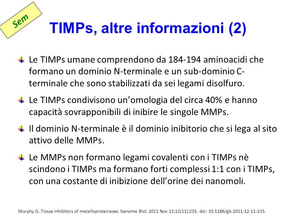 TIMPs, altre informazioni (2) Le TIMPs umane comprendono da 184-194 aminoacidi che formano un dominio N-terminale e un sub-dominio C- terminale che sono stabilizzati da sei legami disolfuro.