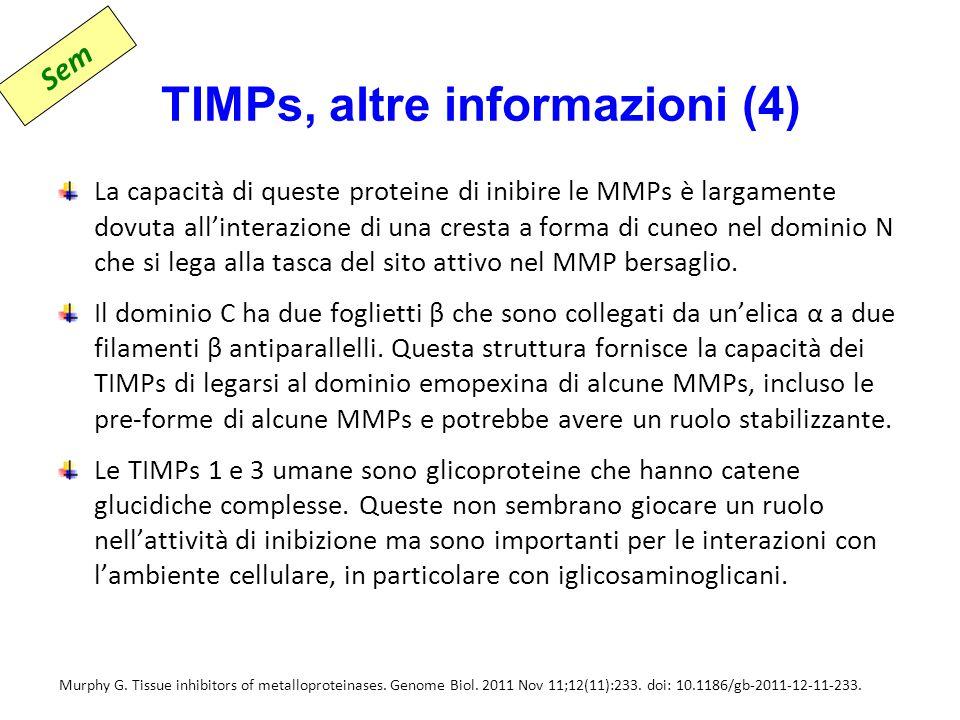 TIMPs, altre informazioni (4) La capacità di queste proteine di inibire le MMPs è largamente dovuta all'interazione di una cresta a forma di cuneo nel dominio N che si lega alla tasca del sito attivo nel MMP bersaglio.