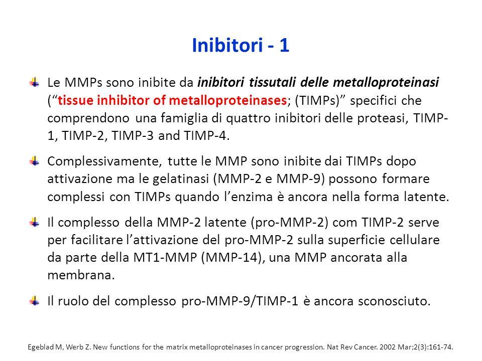 Inibitori - 1 Le MMPs sono inibite da inibitori tissutali delle metalloproteinasi ( tissue inhibitor of metalloproteinases; (TIMPs) specifici che comprendono una famiglia di quattro inibitori delle proteasi, TIMP- 1, TIMP-2, TIMP-3 and TIMP-4.