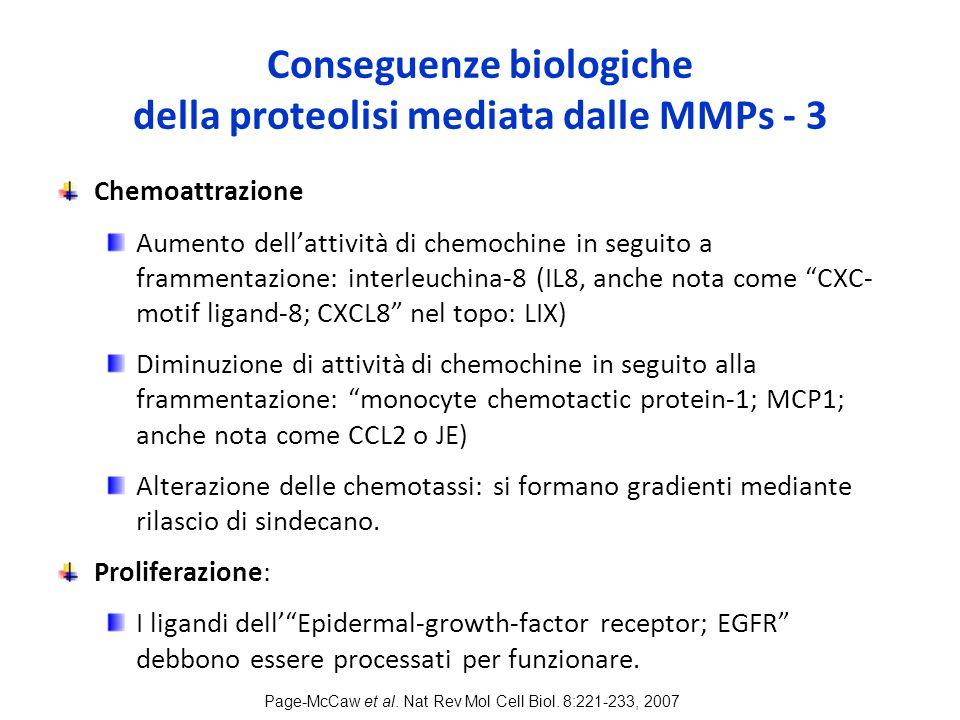 Conseguenze biologiche della proteolisi mediata dalle MMPs - 3 Chemoattrazione Aumento dell'attività di chemochine in seguito a frammentazione: interleuchina-8 (IL8, anche nota come CXC- motif ligand-8; CXCL8 nel topo: LIX) Diminuzione di attività di chemochine in seguito alla frammentazione: monocyte chemotactic protein-1; MCP1; anche nota come CCL2 o JE) Alterazione delle chemotassi: si formano gradienti mediante rilascio di sindecano.