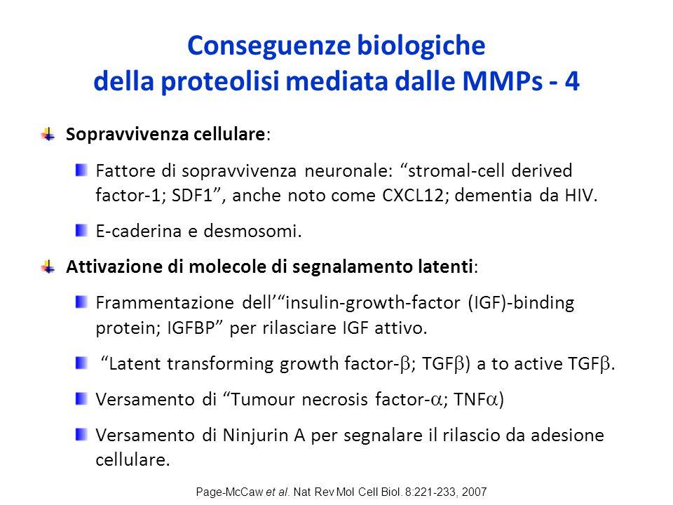 Conseguenze biologiche della proteolisi mediata dalle MMPs - 4 Sopravvivenza cellulare: Fattore di sopravvivenza neuronale: stromal-cell derived factor-1; SDF1 , anche noto come CXCL12; dementia da HIV.