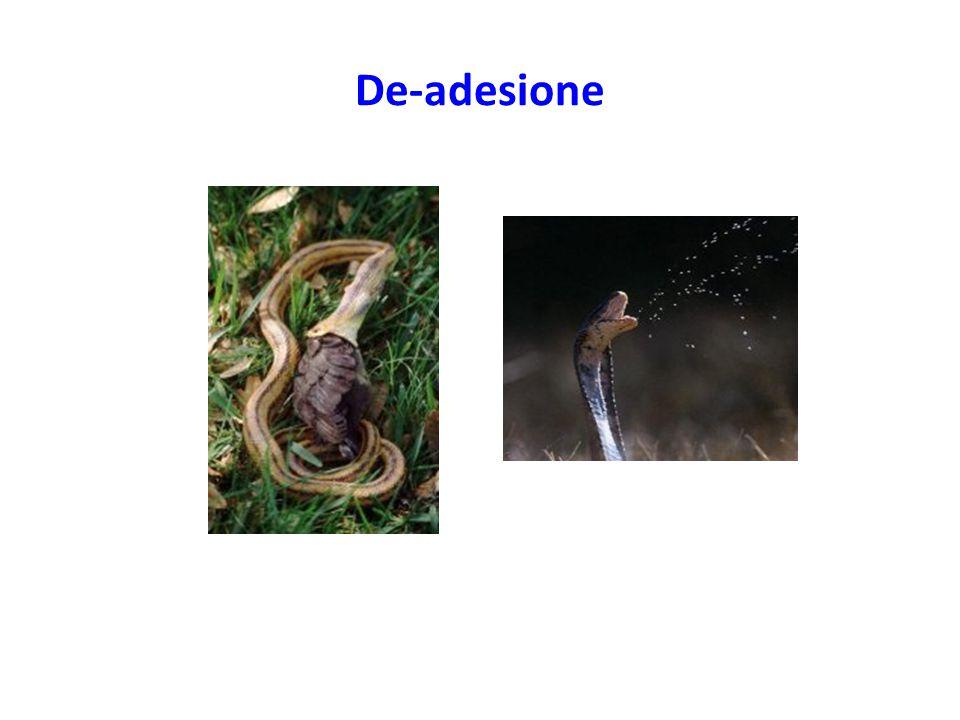 De-adesione