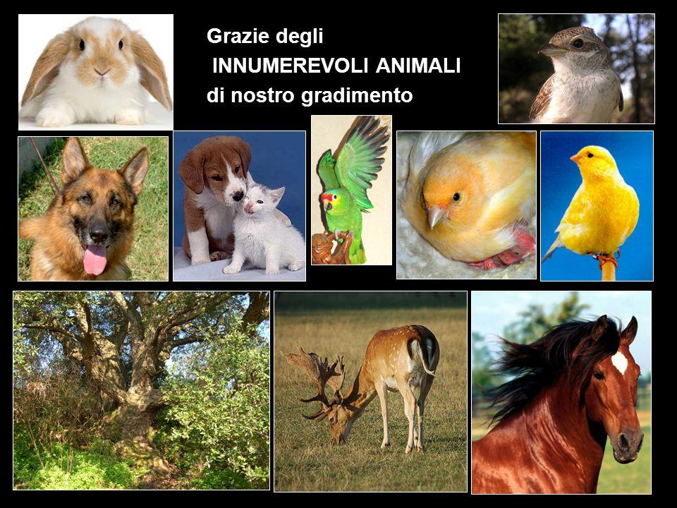 Grazie degli INNUMEREVOLI ANIMALI di nostro gradimento