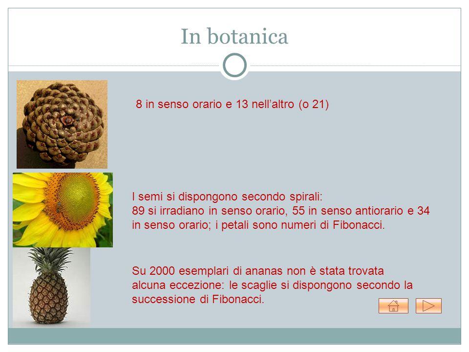 In botanica 8 in senso orario e 13 nell'altro (o 21) I semi si dispongono secondo spirali: 89 si irradiano in senso orario, 55 in senso antiorario e 34 in senso orario; i petali sono numeri di Fibonacci.