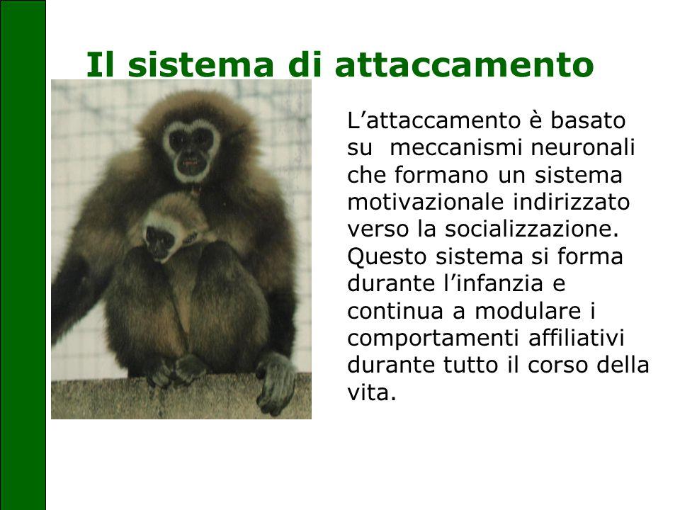 Il sistema di attaccamento L'attaccamento è basato su meccanismi neuronali che formano un sistema motivazionale indirizzato verso la socializzazione.