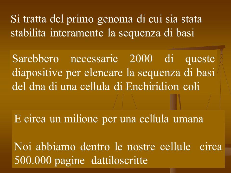 Il genoma Abbiamo meno del doppio dei geni di un verme e meno geni di un qualsiasi vegetale Abbiamo meno del doppio dei geni di un verme e meno geni di un qualsiasi vegetale La differenza tra noi e gli scimpanzè è dell'1,5 % circa 45 milioni di lettere (tre metri di libreria).