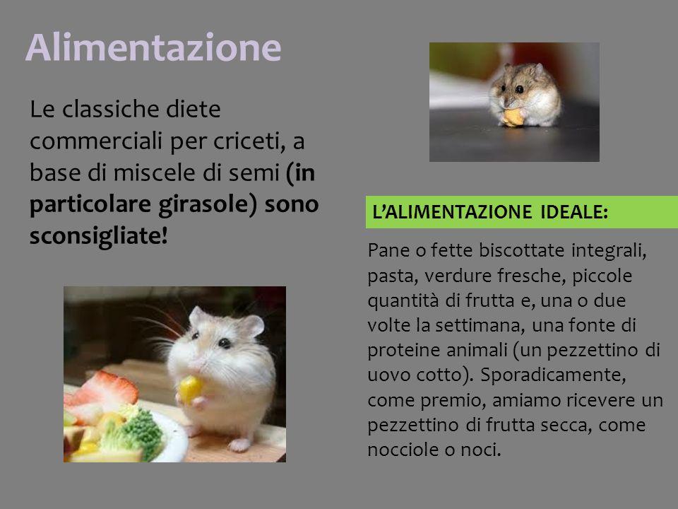 Alimentazione Le classiche diete commerciali per criceti, a base di miscele di semi (in particolare girasole) sono sconsigliate.