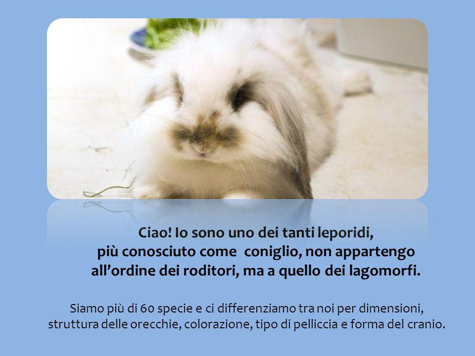 Ciao! Io sono uno dei tanti leporidi, più conosciuto come coniglio, non appartengo all'ordine dei roditori, ma a quello dei lagomorfi. Siamo più di 60