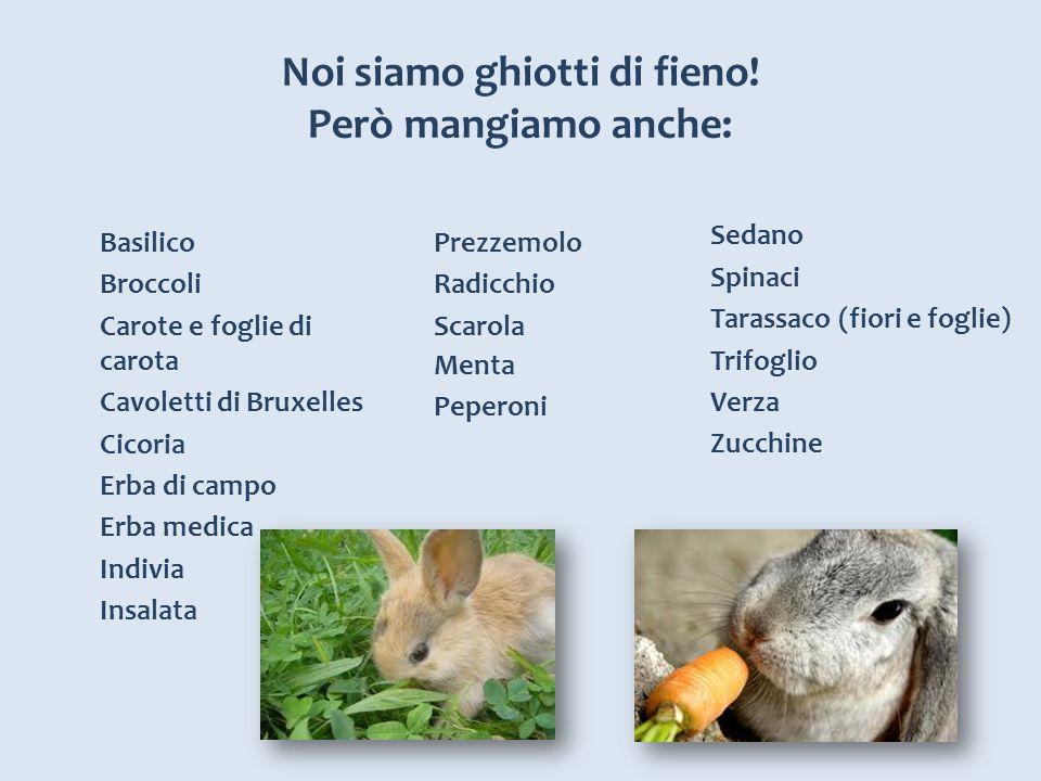 Noi siamo ghiotti di fieno! Però mangiamo anche: Basilico Broccoli Carote e foglie di carota Cavoletti di Bruxelles Cicoria Erba di campo Erba medica