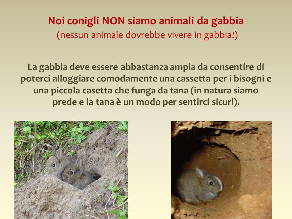 Noi conigli NON siamo animali da gabbia (nessun animale dovrebbe vivere in gabbia!) La gabbia deve essere abbastanza ampia da consentire di poterci al